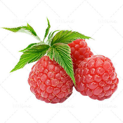 Real Raspberry png