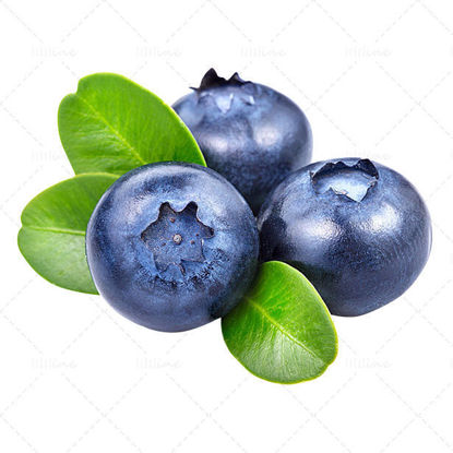Real blueberry png