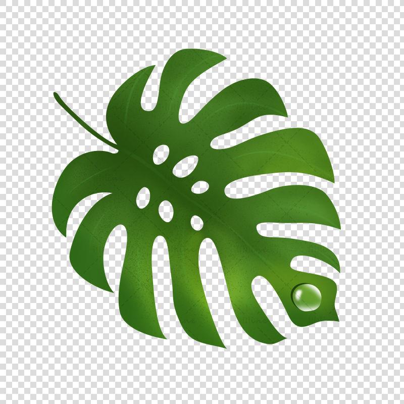 green leaf  water drop