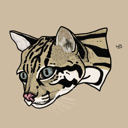 The ocelot (Leopardus pardalis) animal illustration