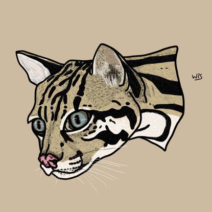 The ocelot (Leopardus pardalis) animal illustration