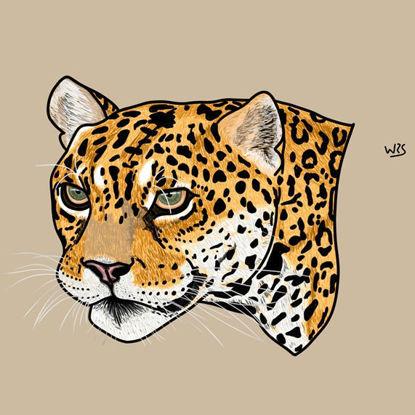 The jaguar (Panthera onca) animal illustration