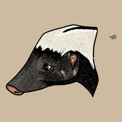 Striped hog-nosed skunk (Conepatus semistriatus) animal illustration