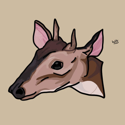 Red Brocket deer (Mazama americana) animal illustration