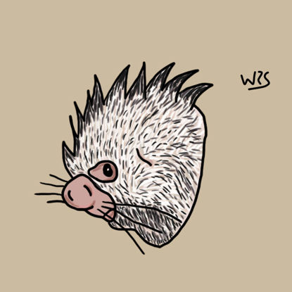 Brazilian Porcupine (Coendou prehensilis) illustration