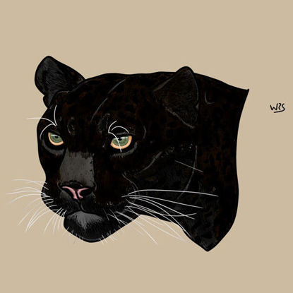 Black jaguar (Panthera onca) animal illustration