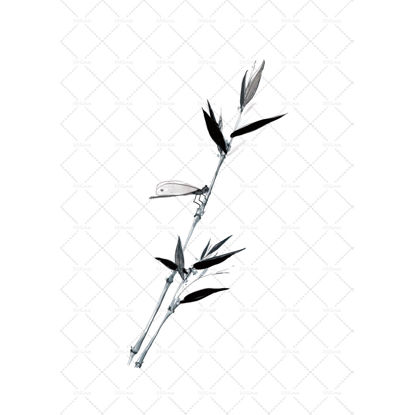 Dragonfly Bamboo