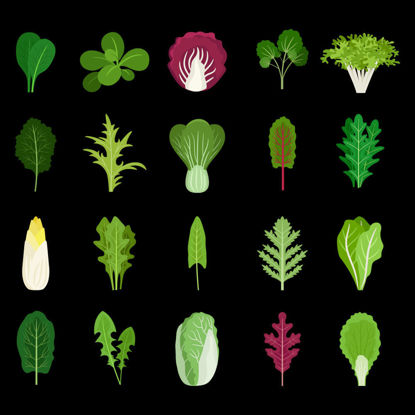 Vector green salad leaf