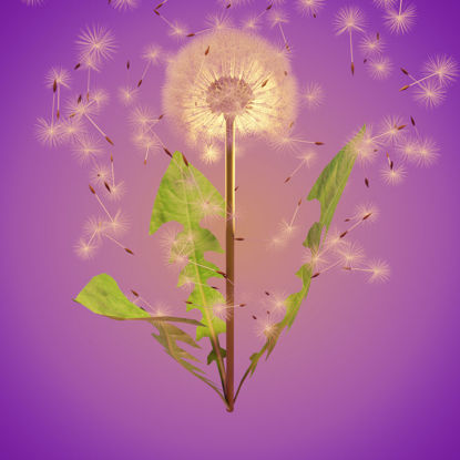 Dandelion 3d model and animation