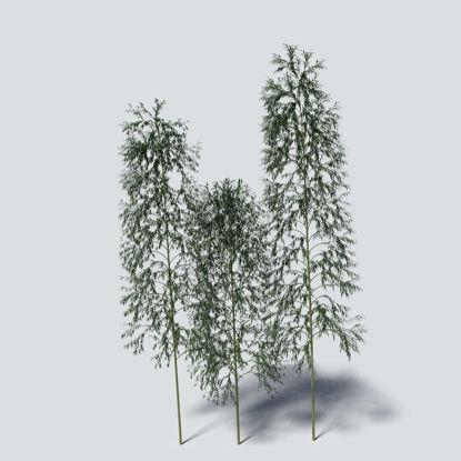Bamboo 3D Model Pack