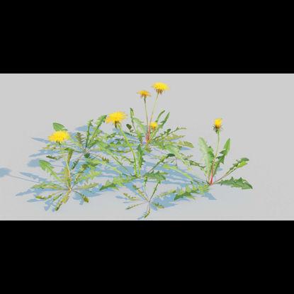 Dandelion Pack 3d model