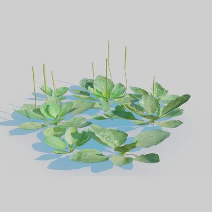 Plantain Pack 3d model