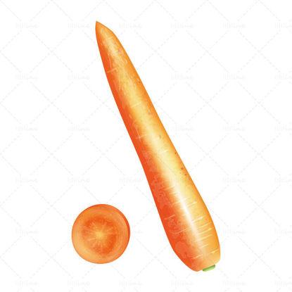 Вектор реалистичен морков