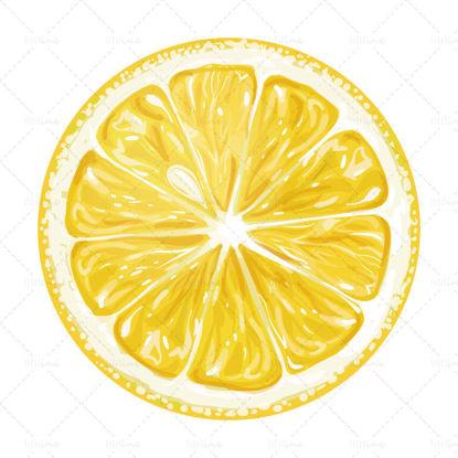 Vector watercolor yellow lemon slices