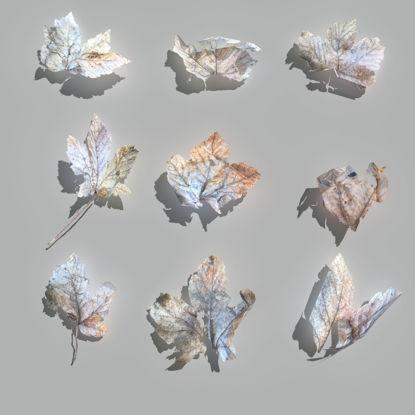 3D Модел на сухи кленови листа