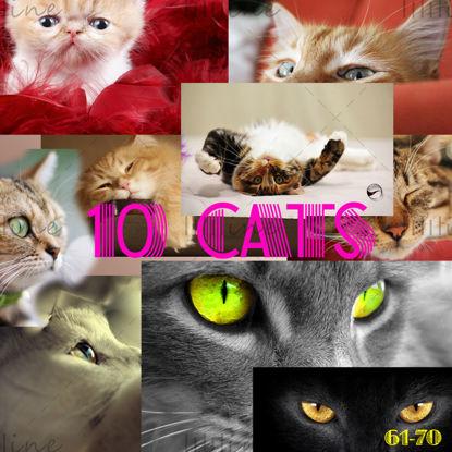 نقشه 10 گربه با دقت بالا 61-70