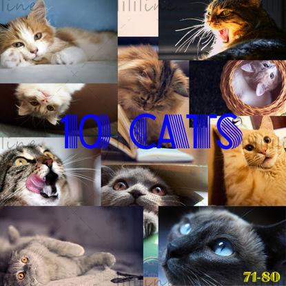 10 گربه نقشه دقیق بالا 71-80