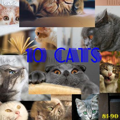 10 گربه نقشه دقیق بالا 81-90