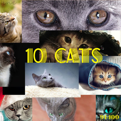 10 گربه نقشه دقیق بالا 91-100