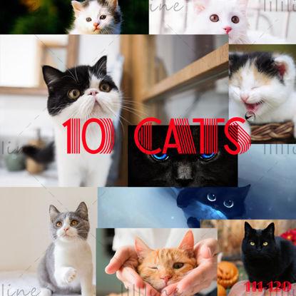 10 گربه