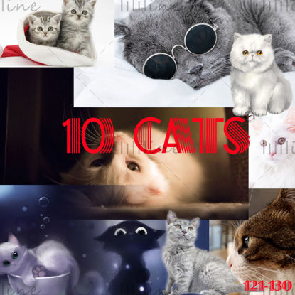 10 گربه خانگی