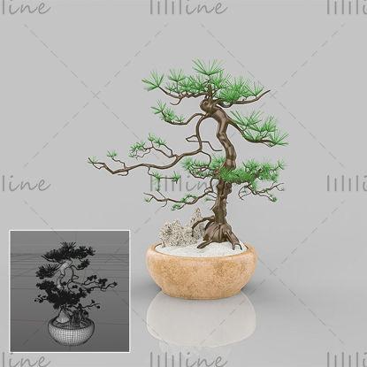 Traditionele Chinese stijl groene aanplant bonsai dennenboom 3D-model